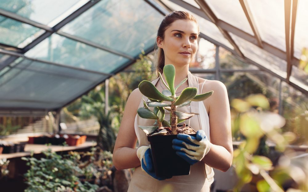 Beautiful young woman with a cactus plant in greenhouse. Female worker working at garden center.